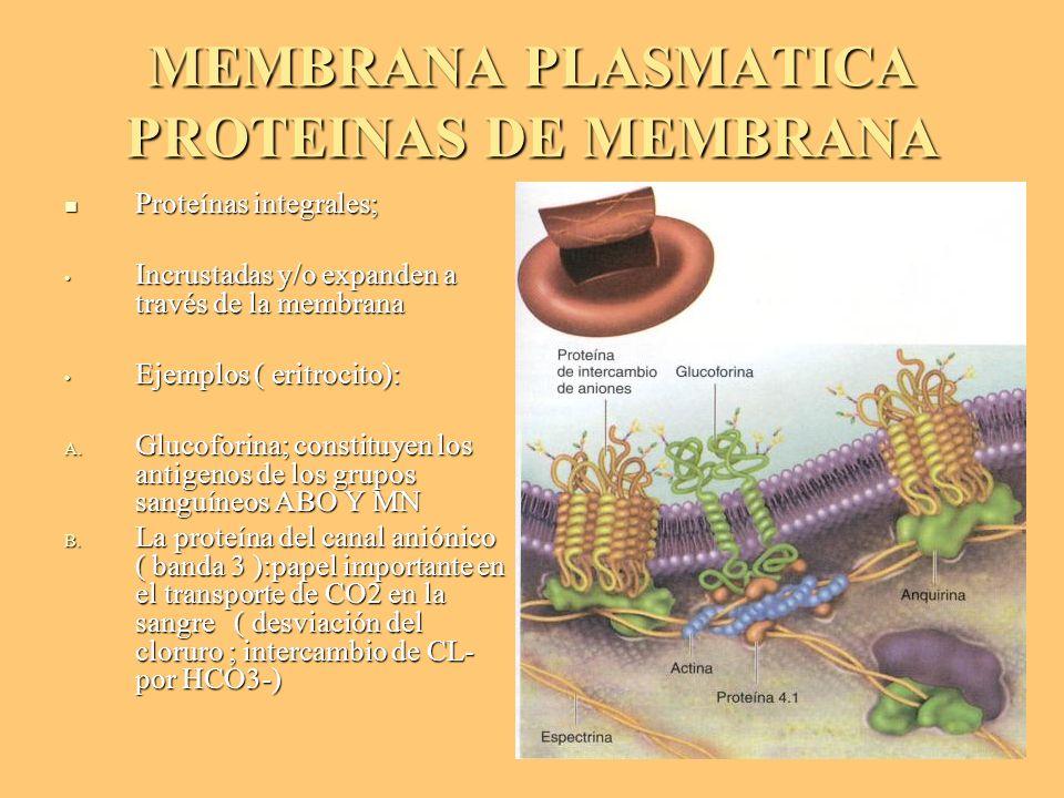 MEMBRANA PLASMATICA PROTEINAS DE MEMBRANA Proteínas integrales; Proteínas integrales; Incrustadas y/o expanden a través de la membrana Incrustadas y/o