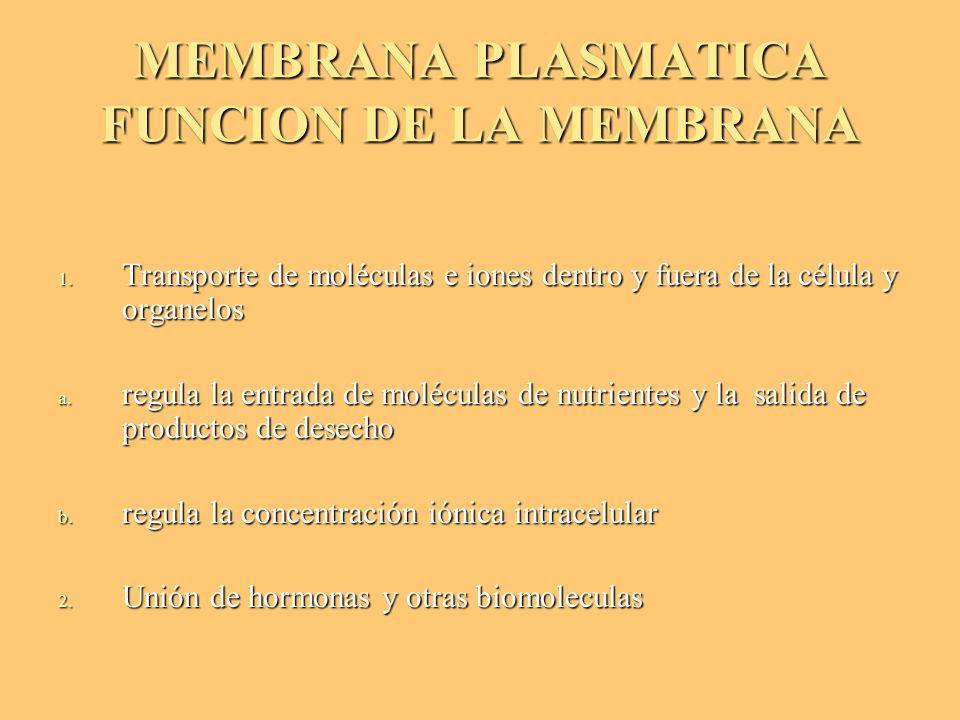 MEMBRANA PLASMATICA FUNCION DE LA MEMBRANA 1. Transporte de moléculas e iones dentro y fuera de la célula y organelos a. regula la entrada de molécula