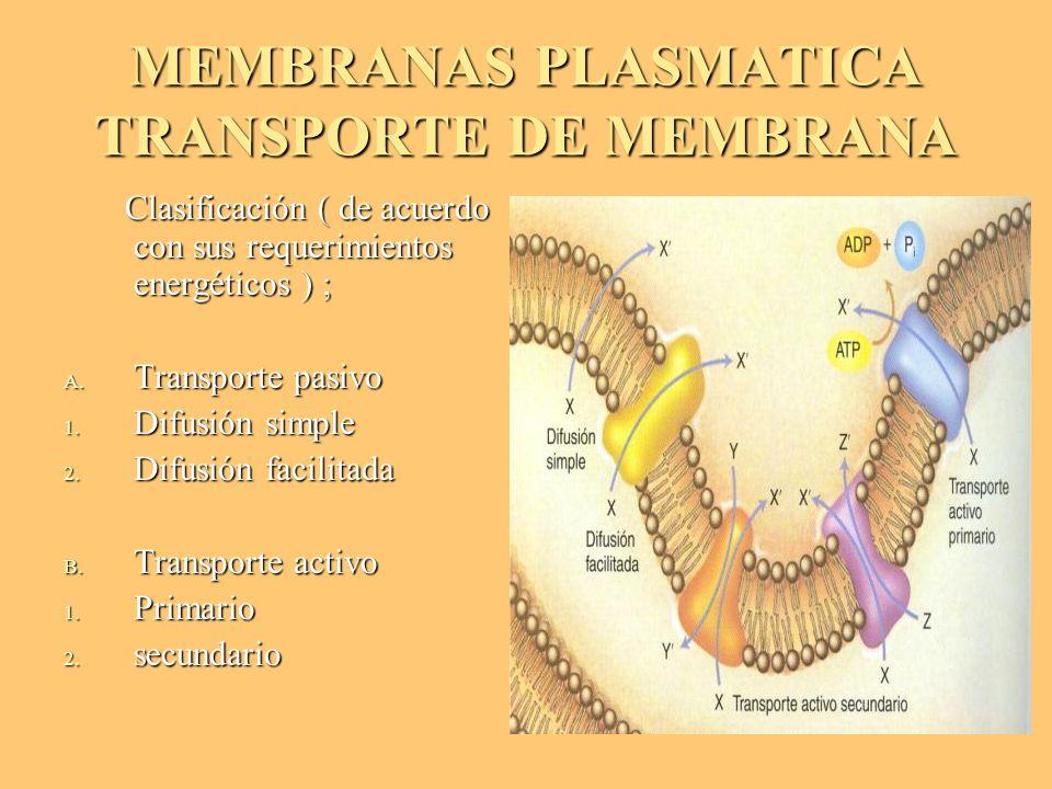 MEMBRANAS PLASMATICA TRANSPORTE DE MEMBRANA Clasificación ( de acuerdo con sus requerimientos energéticos ) ; Clasificación ( de acuerdo con sus reque