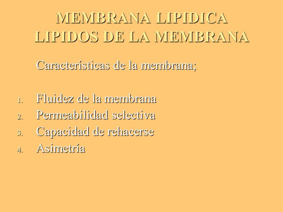 MEMBRANA LIPIDICA LIPIDOS DE LA MEMBRANA Características de la membrana; Características de la membrana; 1. Fluidez de la membrana 2. Permeabilidad se