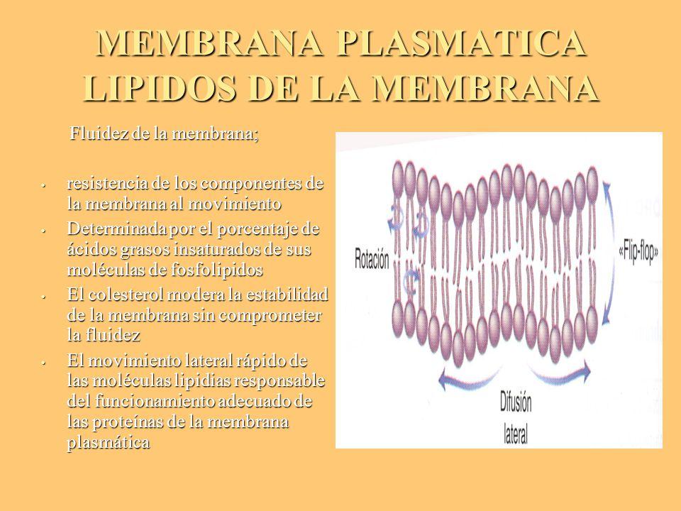 MEMBRANA PLASMATICA LIPIDOS DE LA MEMBRANA Fluidez de la membrana; Fluidez de la membrana; resistencia de los componentes de la membrana al movimiento