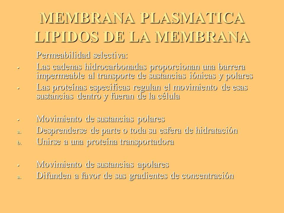 MEMBRANA PLASMATICA LIPIDOS DE LA MEMBRANA Permeabilidad selectiva: Permeabilidad selectiva: Las cadenas hidrocarbonadas proporcionan una barrera impe
