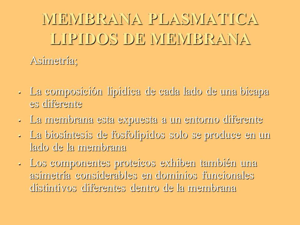 MEMBRANA PLASMATICA LIPIDOS DE MEMBRANA Asimetría; Asimetría; La composición lipidica de cada lado de una bicapa es diferente La composición lipidica