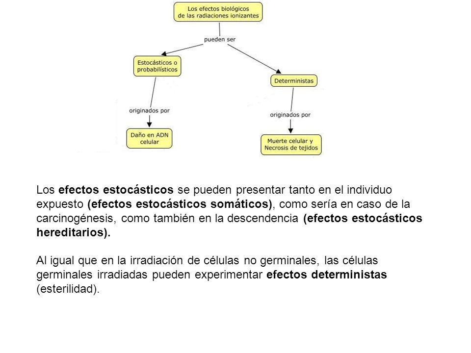 Los efectos estocásticos se pueden presentar tanto en el individuo expuesto (efectos estocásticos somáticos), como sería en caso de la carcinogénesis,