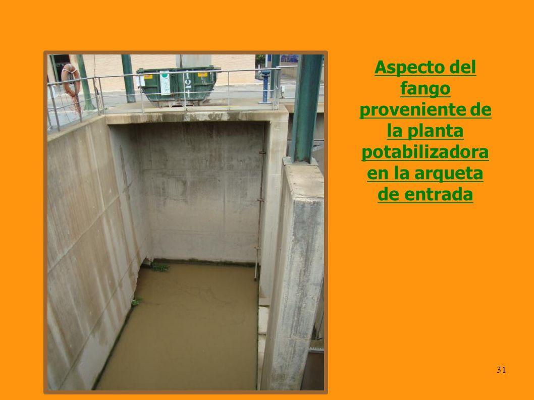 31 Aspecto del fango proveniente de la planta potabilizadora en la arqueta de entrada