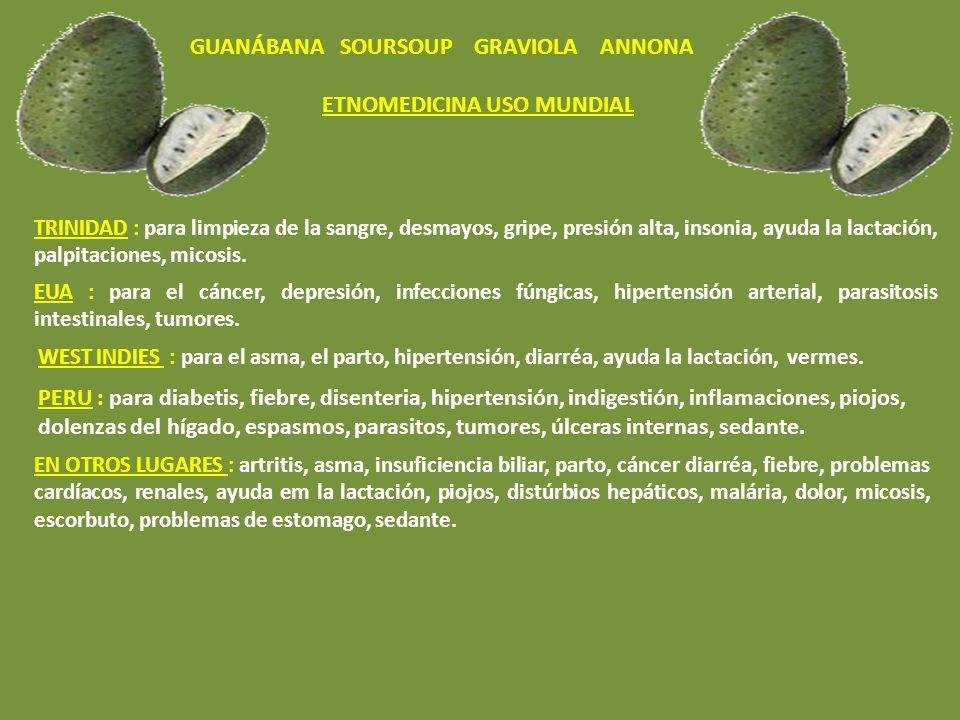GUANÁBANA SOURSOUP GRAVIOLA ANNONA ETNOMEDICINA USO MUNDIAL BRASIL :cáncer, diabetis(baja la glucosa), abcesos, bronquite, problemas em el pecho, tos,