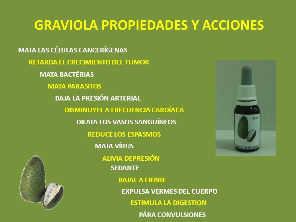 GRAVIOLA PROPIEDADES Y ACCIONES MATA LAS CÉLULAS CANCERÍGENAS RETARDA EL CRECIMIENTO DEL TUMOR MATA BACTÉRIAS MATA PARASITOS BAJA LA PRESIÓN ARTERIAL DISMINUYEL A FRECUENCIA CARDÍACA DILATA LOS VASOS SANGUÍNEOS SEDANTE ALIVIA DEPRESIÓN REDUCE LOS ESPASMOS MATA VÍRUS BAJAL A FIEBRE EXPULSA VERMES DEL CUERPO ESTIMULA LA DIGESTION PÁRA CONVULSIONES