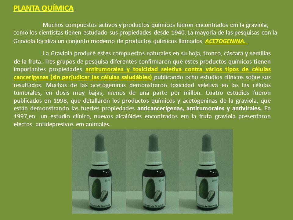 PLANTA QUÍMICA Muchos compuestos activos y productos químicos fueron encontrados em la graviola, como los cientistas tienen estudado sus propiedades desde 1940.