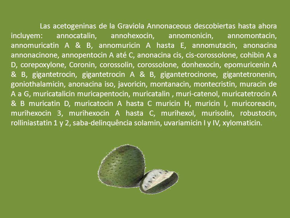 Las acetogeninas de la Graviola Annonaceous descobiertas hasta ahora incluyem: annocatalin, annohexocin, annomonicin, annomontacin, annomuricatin A & B, annomuricin A hasta E, annomutacin, anonacina annonacinone, annopentocin A até C, anonacina cis, cis-corossolone, cohibin A a D, corepoxylone, Coronin, corossolin, corossolone, donhexocin, epomuricenin A & B, gigantetrocin, gigantetrocin A & B, gigantetrocinone, gigantetronenin, goniothalamicin, anonacina iso, javoricin, montanacin, montecristin, muracin de A a G, muricatalicin muricapentocin, muricatalin, muri-catenol, muricatetrocin A & B muricatin D, muricatocin A hasta C muricin H, muricin I, muricoreacin, murihexocin 3, murihexocin A hasta C, murihexol, murisolin, robustocin, rolliniastatin 1 y 2, saba-delinquência solamin, uvariamicin I y IV, xylomaticin.