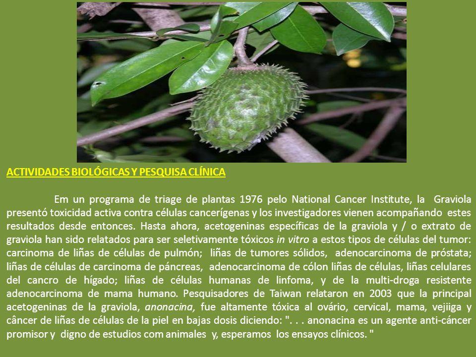 Las acetogeninas de la Graviola Annonaceous descobiertas hasta ahora incluyem: annocatalin, annohexocin, annomonicin, annomontacin, annomuricatin A &