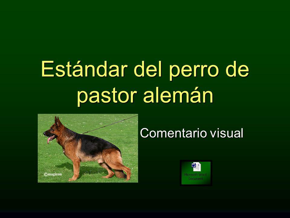 Estándar del perro de pastor alemán Comentario visual