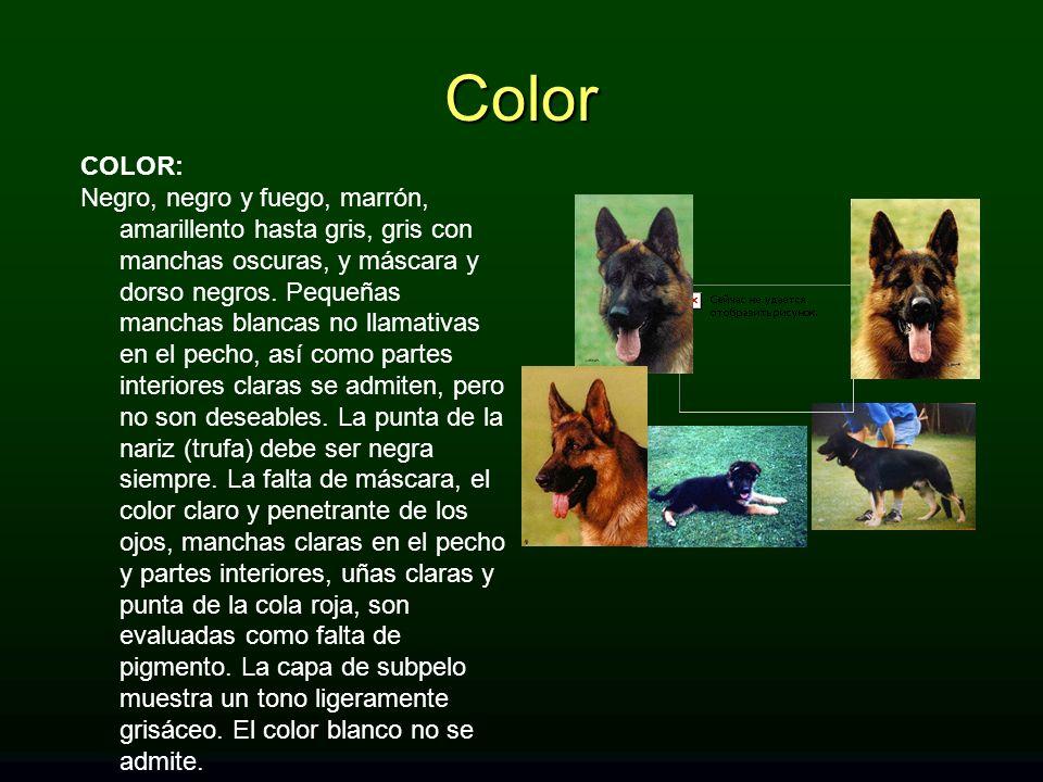 COLOR: Negro, negro y fuego, marrón, amarillento hasta gris, gris con manchas oscuras, y máscara y dorso negros. Pequeñas manchas blancas no llamativa