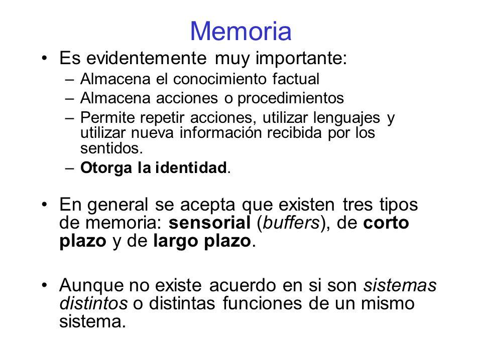 Memoria Es evidentemente muy importante: –Almacena el conocimiento factual –Almacena acciones o procedimientos –Permite repetir acciones, utilizar lenguajes y utilizar nueva información recibida por los sentidos.