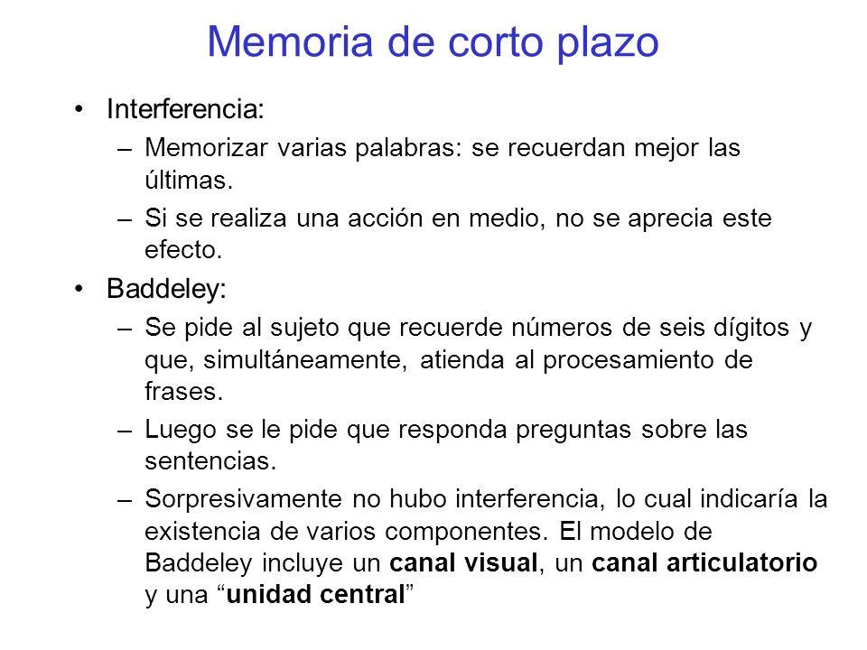 Interferencia: –Memorizar varias palabras: se recuerdan mejor las últimas. –Si se realiza una acción en medio, no se aprecia este efecto. Baddeley: –S