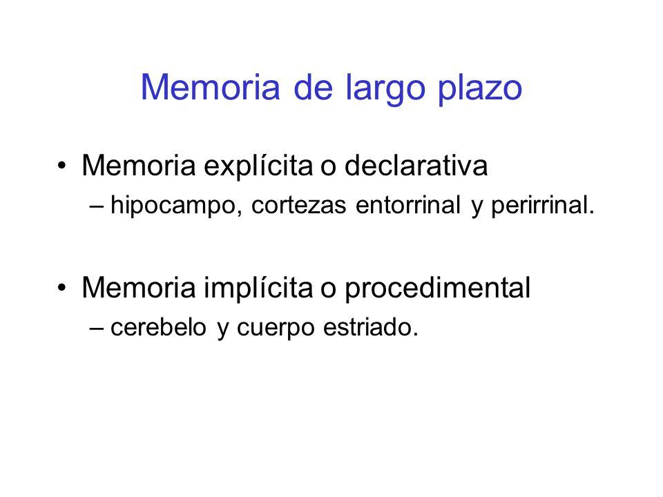 Memoria de largo plazo Memoria explícita o declarativa –hipocampo, cortezas entorrinal y perirrinal. Memoria implícita o procedimental –cerebelo y cue