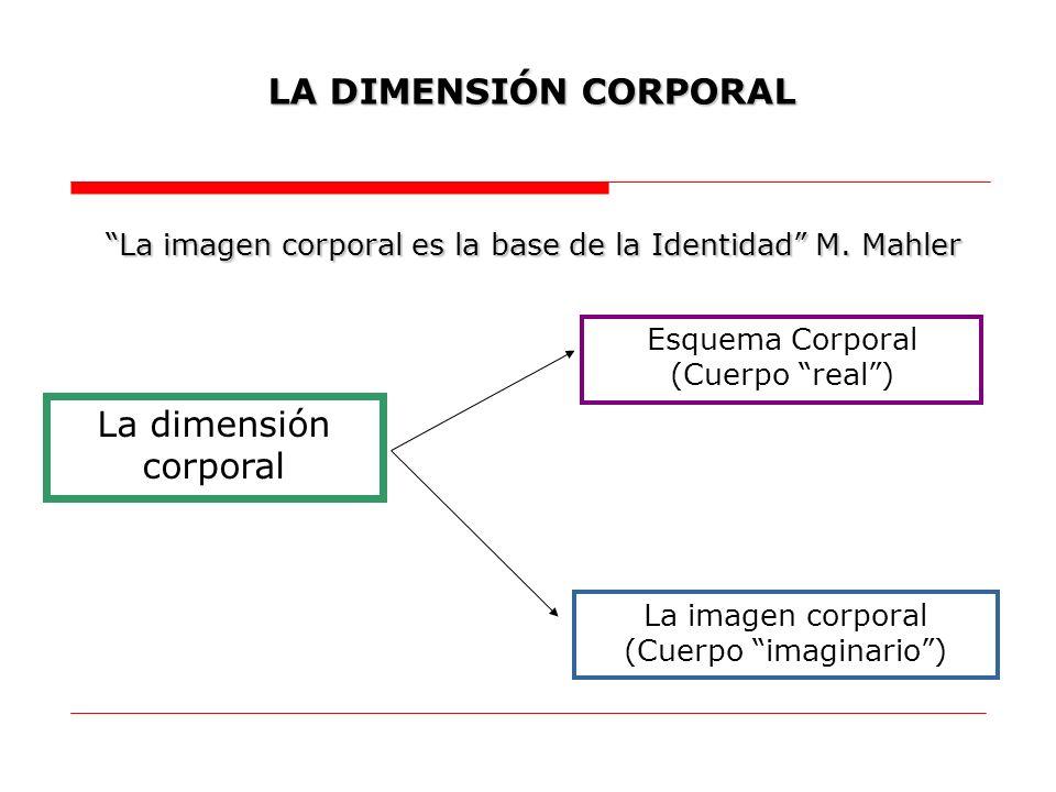 La dimensión corporal LA DIMENSIÓN CORPORAL Esquema Corporal (Cuerpo real) La imagen corporal (Cuerpo imaginario) La imagen corporal es la base de la