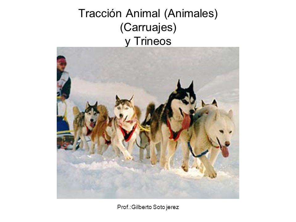 Prof.:Gilberto Soto jerez Tracción Animal (Animales) (Carruajes) y Trineos