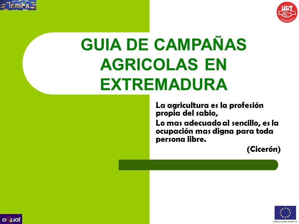 2.CALENDARIO DE RECOLECCIÓN CEREZAS La campaña transcurre en los meses de abril, mayo, junio.