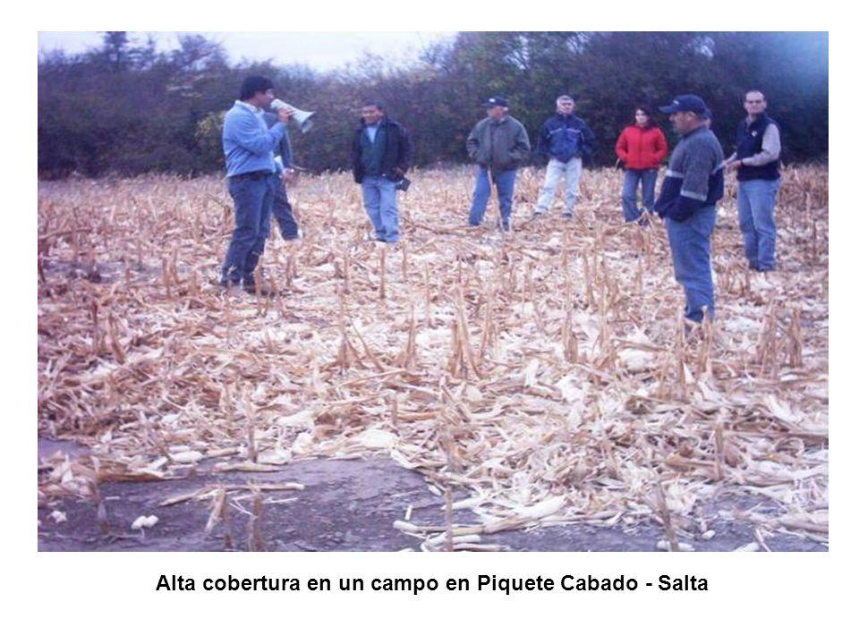 Alta cobertura en un campo en Piquete Cabado - Salta