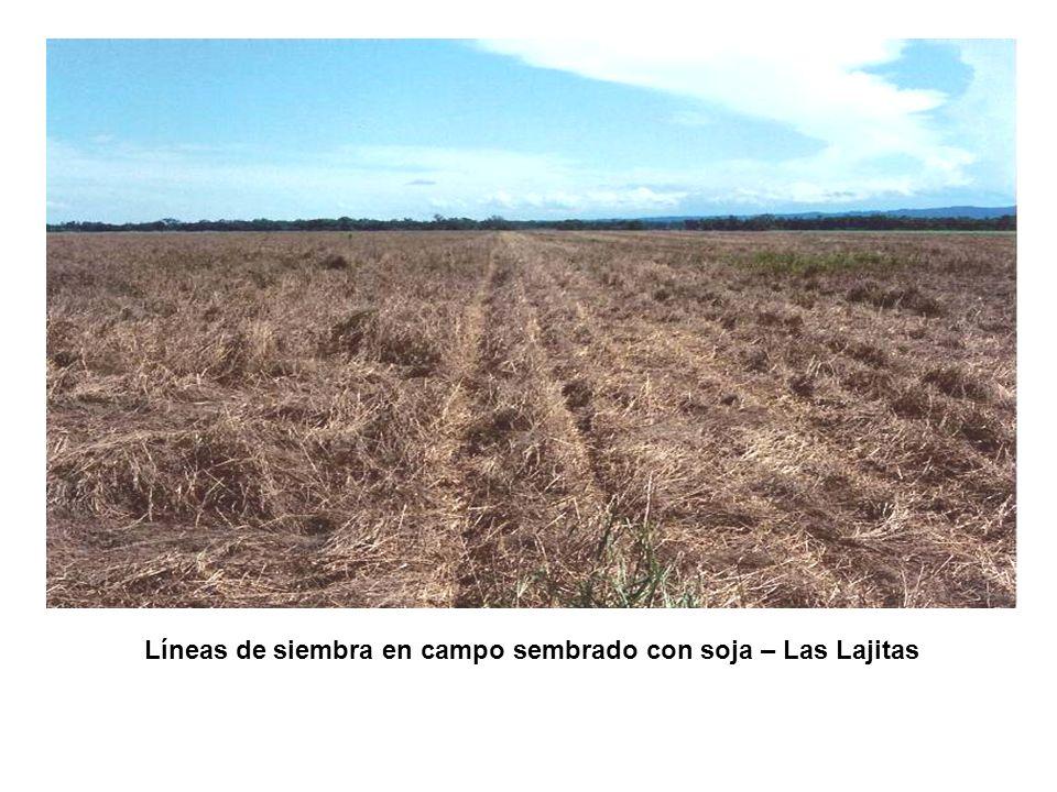 Líneas de siembra en campo sembrado con soja – Las Lajitas