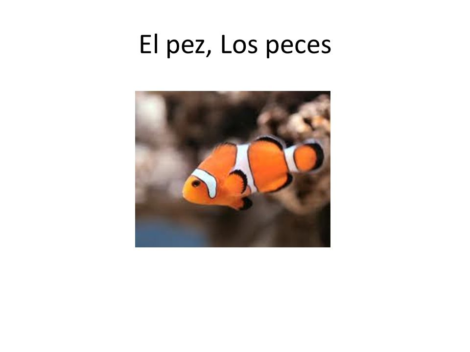 El pez, Los peces