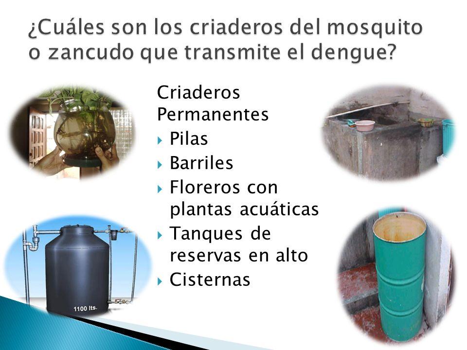 Criaderos Permanentes Pilas Barriles Floreros con plantas acuáticas Tanques de reservas en alto Cisternas