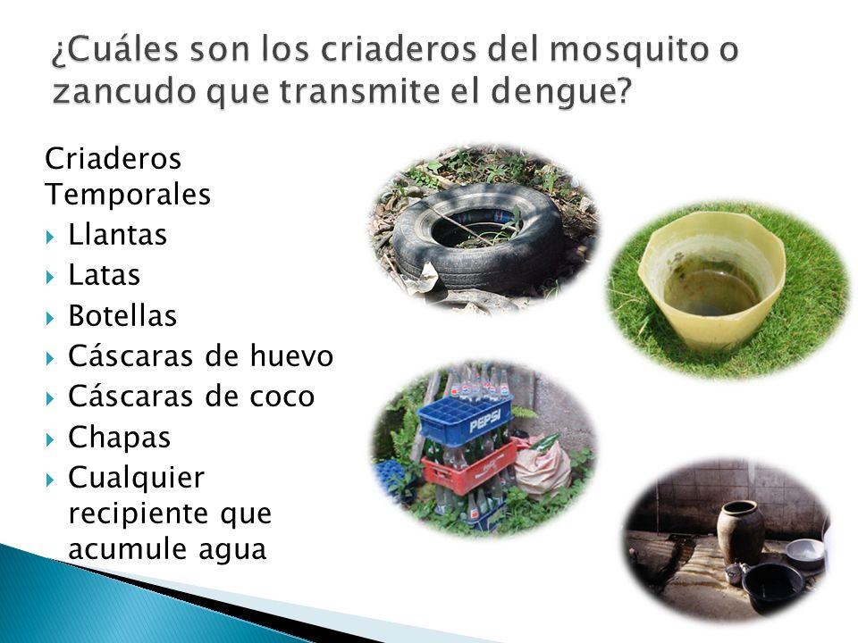 Criaderos Temporales Llantas Latas Botellas Cáscaras de huevo Cáscaras de coco Chapas Cualquier recipiente que acumule agua