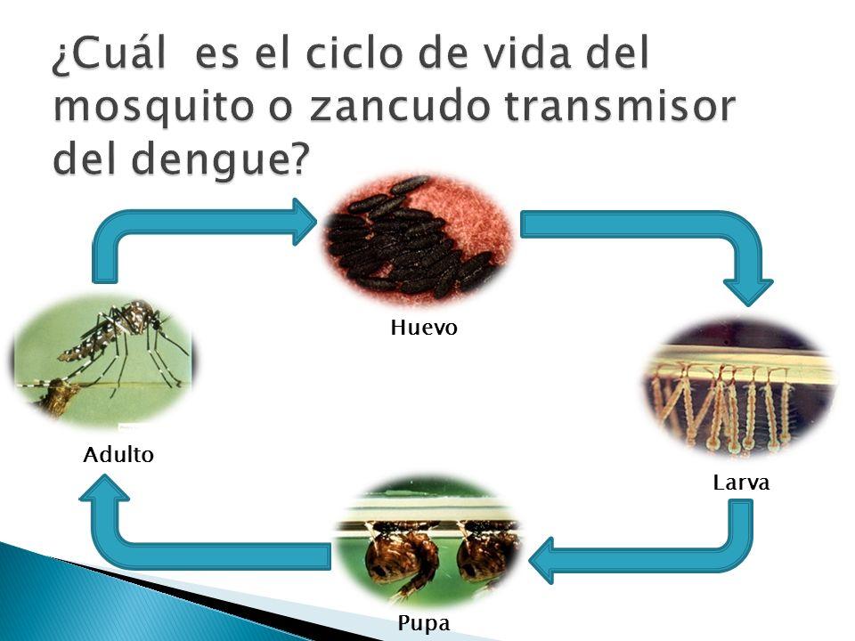 Operativos de limpieza en la vivienda, solares baldíos y comunidad Control de criaderos en talleres, llanteras, yonquers y cementerios