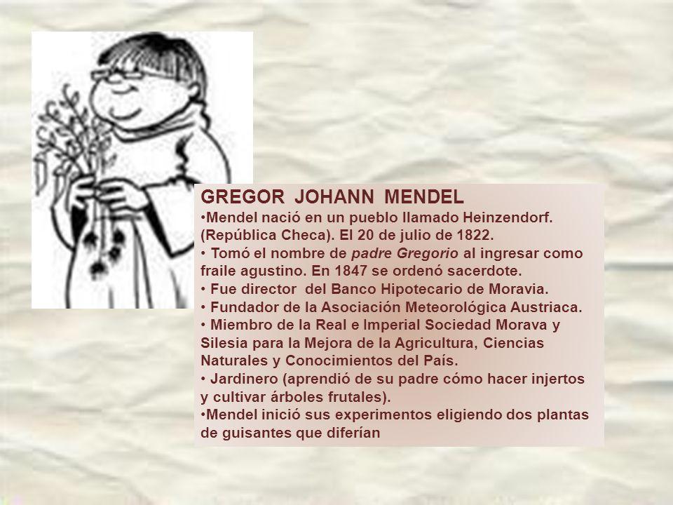 GREGOR JOHANN MENDEL Mendel nació en un pueblo llamado Heinzendorf.