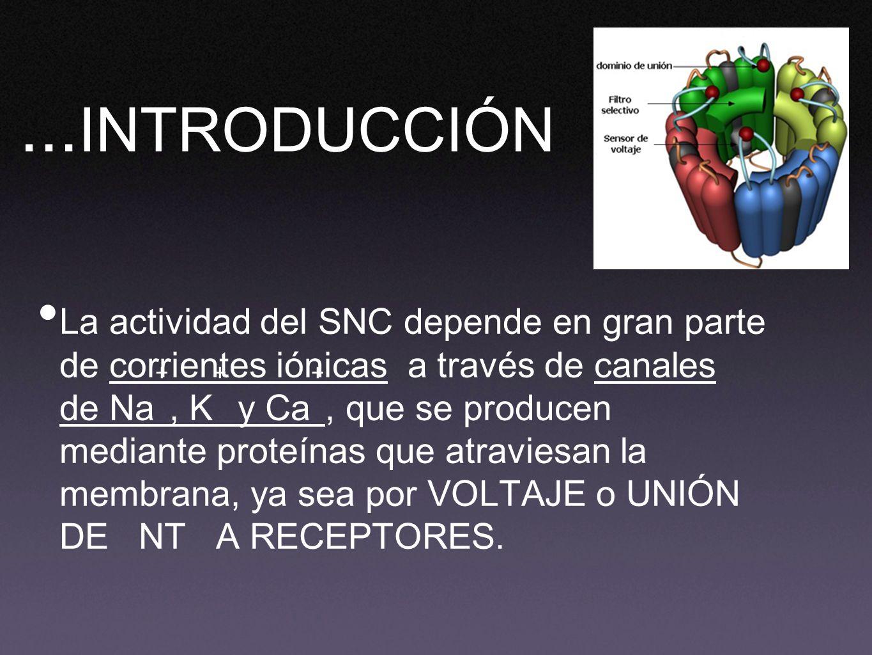 ... INTRODUCCIÓN La actividad del SNC depende en gran parte de corrientes iónicas a través de canales de Na, K y Ca, que se producen mediante proteína