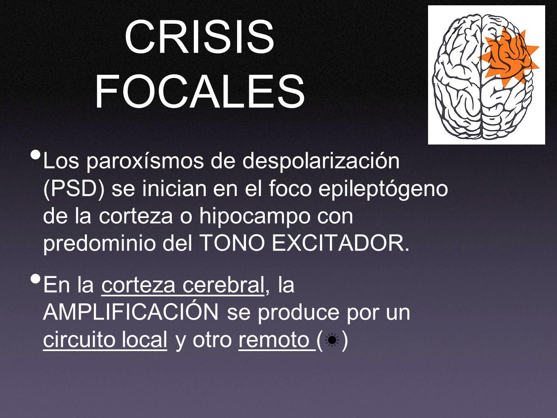 CRISIS FOCALES Los paroxísmos de despolarización (PSD) se inician en el foco epileptógeno de la corteza o hipocampo con predominio del TONO EXCITADOR.