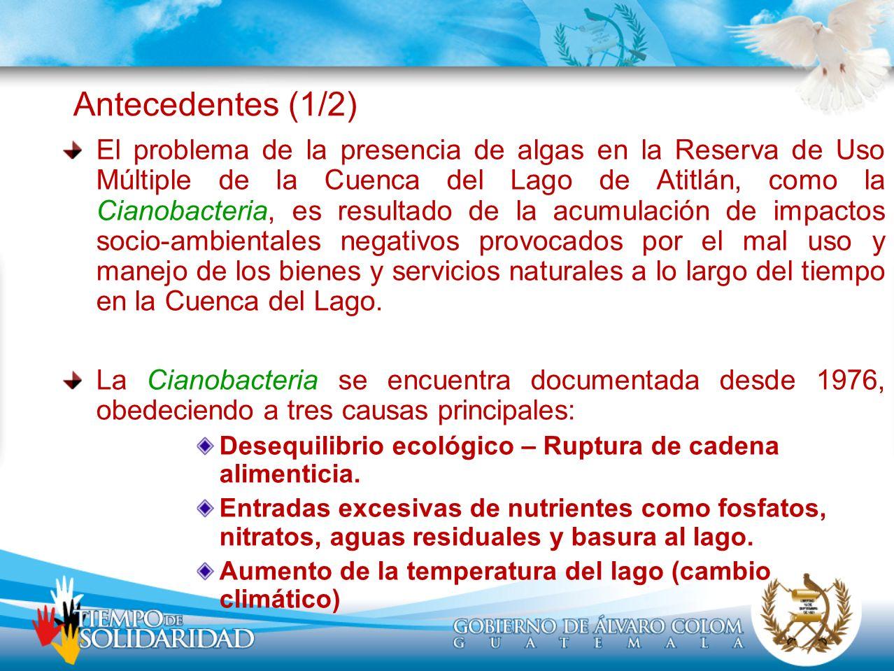 Antecedentes (1/2) El problema de la presencia de algas en la Reserva de Uso Múltiple de la Cuenca del Lago de Atitlán, como la Cianobacteria, es resu