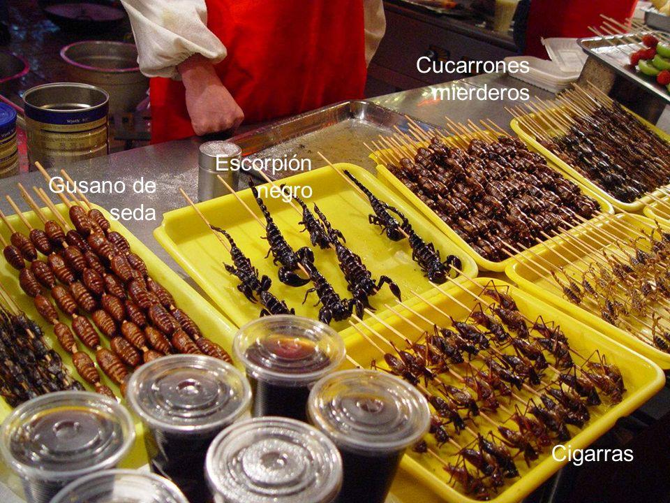 Escorpión negro Gusano de seda Cigarras Cucarrones mierderos