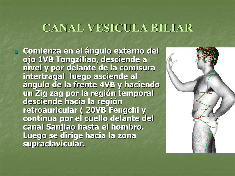 CANAL VESICULA BILIAR Comienza en el ángulo externo del ojo 1VB Tongziliao, desciende a nivel y por delante de la comisura intertragal luego asciende