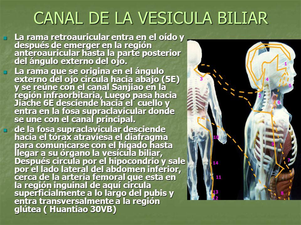 CANAL DE LA VESICULA BILIAR La rama retroauricular entra en el oído y después de emerger en la región anteroauricular hasta la parte posterior del áng