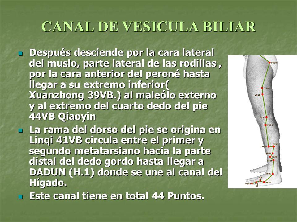 CANAL DE VESICULA BILIAR Después desciende por la cara lateral del muslo, parte lateral de las rodillas, por la cara anterior del peroné hasta llegar