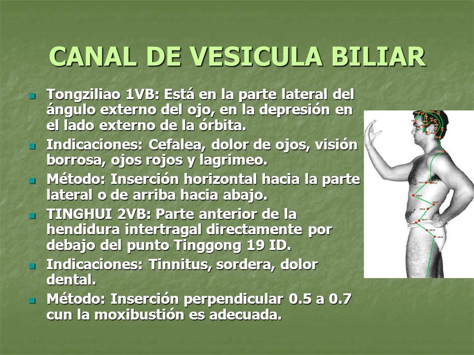 CANAL DE VESICULA BILIAR Tongziliao 1VB: Está en la parte lateral del ángulo externo del ojo, en la depresión en el lado externo de la órbita. Tongzil