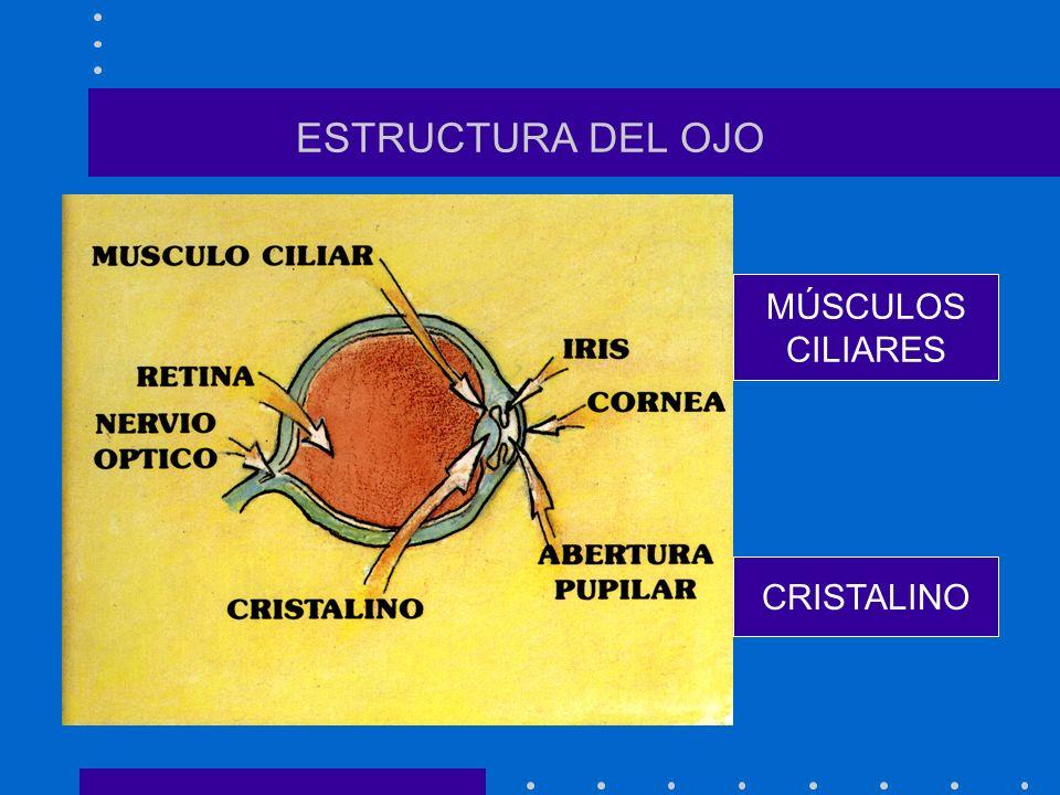 PROGRAMA DE PREVENCIÓN DE LA MIOPÍA EN COLEGIOS PÚBLICOS DEL DISTRITO VIII DE ALCALÁ DE HENARES Antonio-Alberto Rodríguez González U.A.M. (Abril 2001)