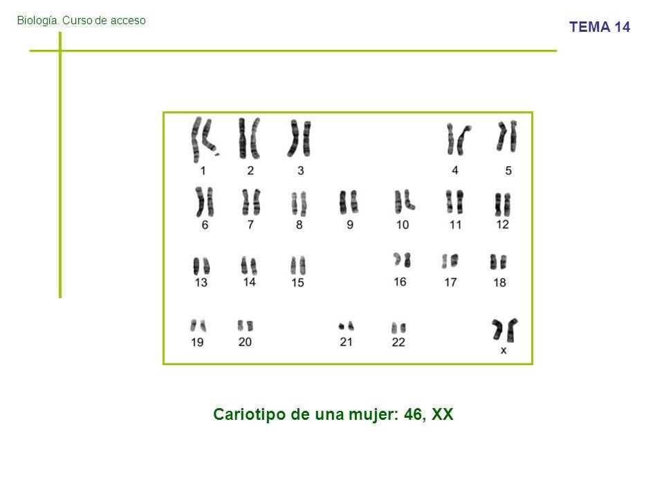 Biología.Curso de acceso TEMA 14 ¿Será niño, o niña.