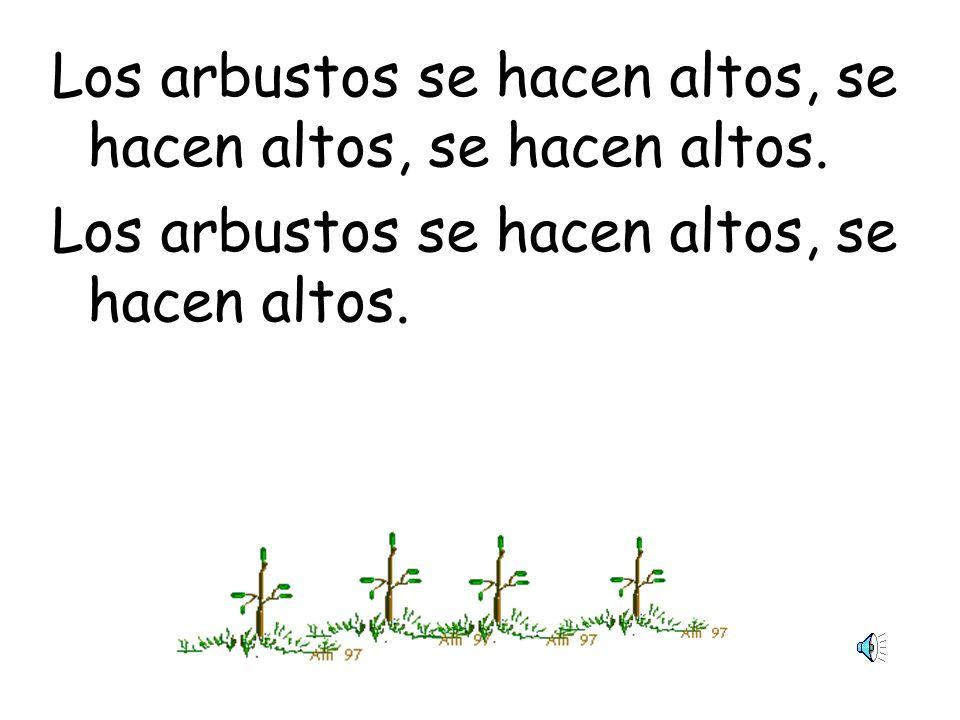 Los arbustos se hacen altos, se hacen altos, se hacen altos.