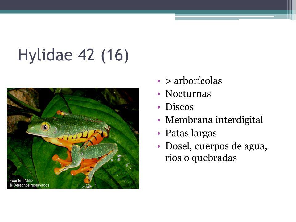 Hylidae 42 (16) > arborícolas Nocturnas Discos Membrana interdigital Patas largas Dosel, cuerpos de agua, ríos o quebradas