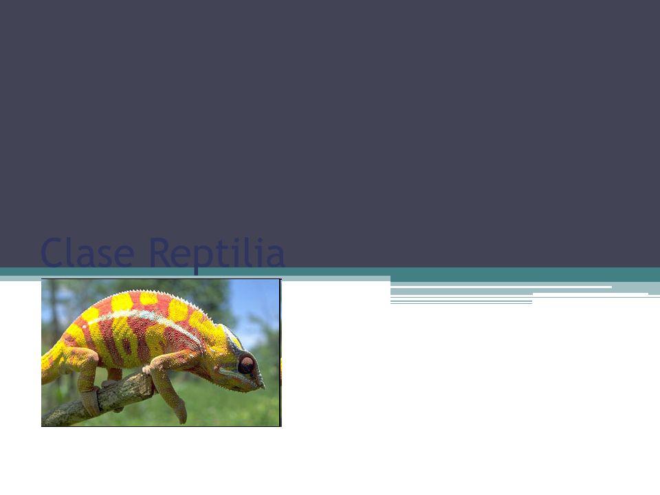 Clase Reptilia Carolina Esquivel