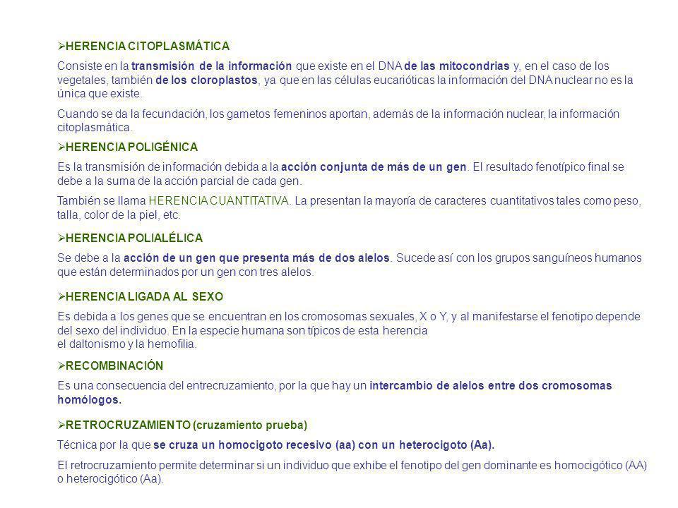 HERENCIA CITOPLASMÁTICA Consiste en la transmisión de la información que existe en el DNA de las mitocondrias y, en el caso de los vegetales, también de los cloroplastos, ya que en las células eucarióticas la información del DNA nuclear no es la única que existe.