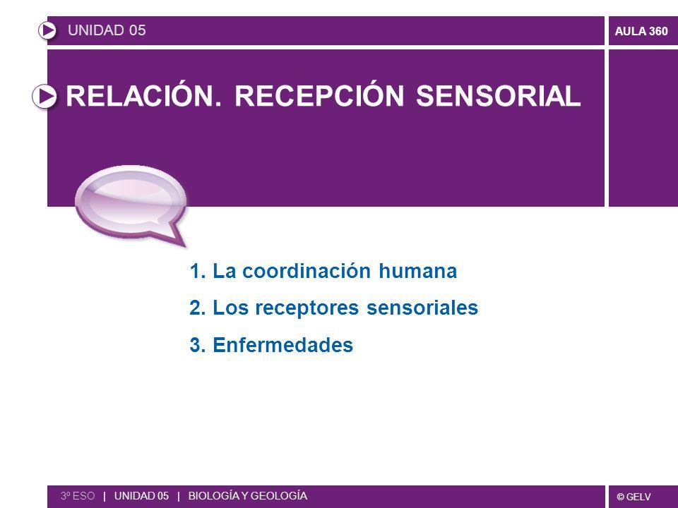 © GELV AULA 360 RELACIÓN. RECEPCIÓN SENSORIAL 1. La coordinación humana 2. Los receptores sensoriales 3. Enfermedades UNIDAD 05 3º ESO | UNIDAD 05 | B