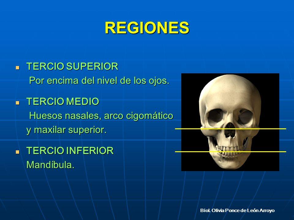 REGIONES TERCIO SUPERIOR TERCIO SUPERIOR Por encima del nivel de los ojos.