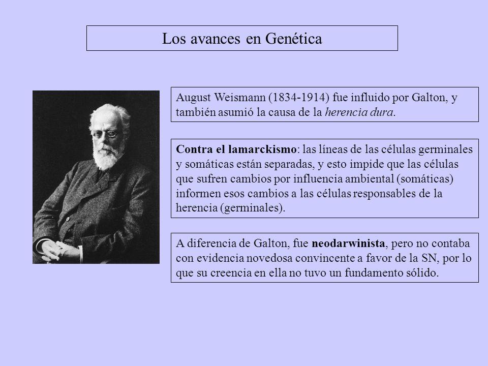 Los avances en Genética August Weismann (1834-1914) fue influido por Galton, y también asumió la causa de la herencia dura. Contra el lamarckismo: las