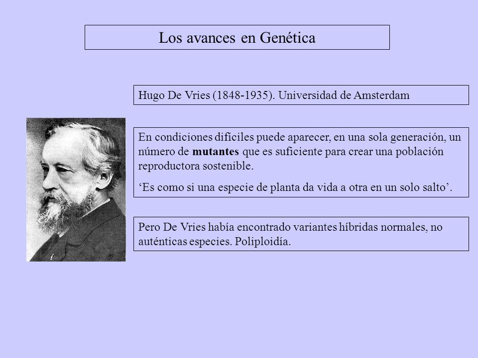 Los avances en Genética Hugo De Vries (1848-1935). Universidad de Amsterdam En condiciones difíciles puede aparecer, en una sola generación, un número