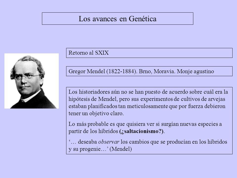 Los avances en Genética Gregor Mendel (1822-1884). Brno, Moravia. Monje agustino Los historiadores aún no se han puesto de acuerdo sobre cuál era la h
