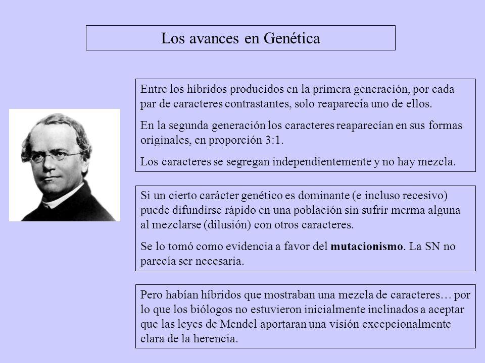 Hacia 1902, mendelianos como T Boveri Y W Sutton señalaron que los hipotéticos factores mendelianos (genes) se comportan como los cromosomas.