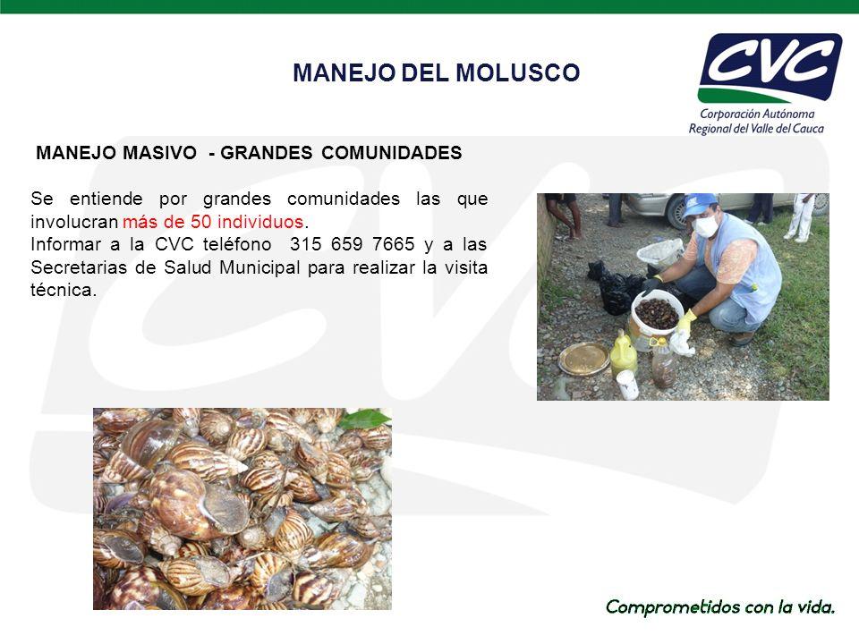 MANEJO MASIVO - GRANDES COMUNIDADES Se entiende por grandes comunidades las que involucran más de 50 individuos.